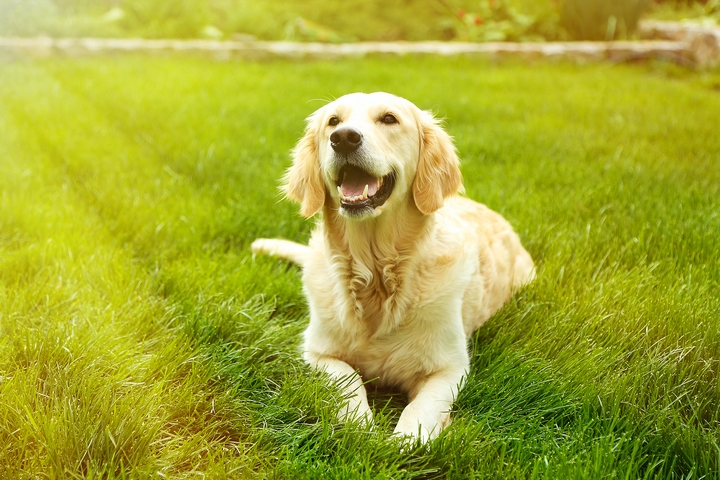 7 Popular Types of Dogs for Families